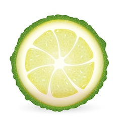 Sliced kaffir lime vector