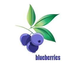 Bright blueberries vector