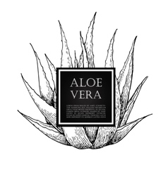 Hand drawn botanical aloe vera vector