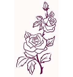 Pale roses vector