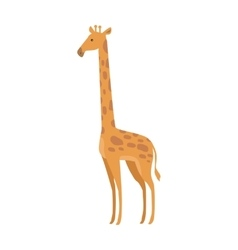 Giraffe giraffa camelopardalis cartoon animal vector