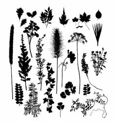 botanical silhouettes vector image vector image