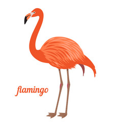 flamingo vector image
