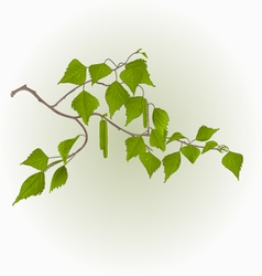 Birch twig with catkins natural background vector