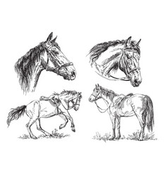 set of hand drawing horses in black and white vector image