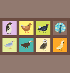 bird species collection different vector image vector image