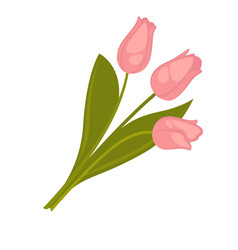 Three pink tulip flowers bouquet with green leaves vector