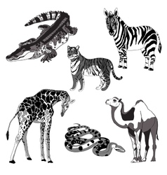 giraffe zebra crocodile vector image