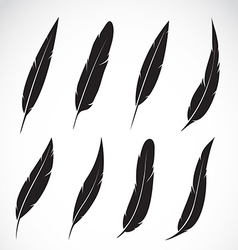 Group of feather vector image vector image