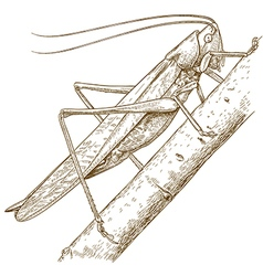 Engraving grasshopper vector