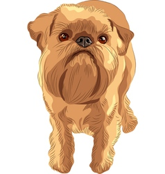 Brussels Griffon vector image vector image