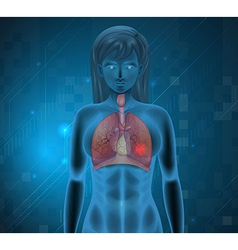 Human respiratory system vector image vector image