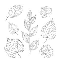 Outline leaves set vector image vector image