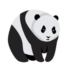 Giant Panda Bear Isolated on White vector image