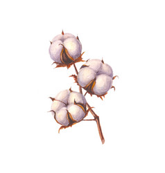 Watercolor cotton branch isolated vector