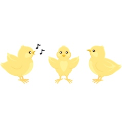 Three yellow chicks vector