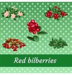 Collection of ripe juicy delicious sweet berries vector image