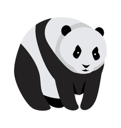 Giant Panda Bear Isolated on White vector image