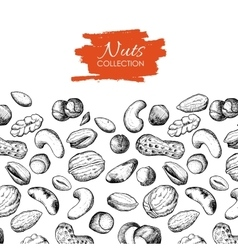 hand drawn nuts vector image vector image