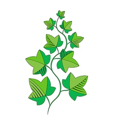 Sprig of ivy vector