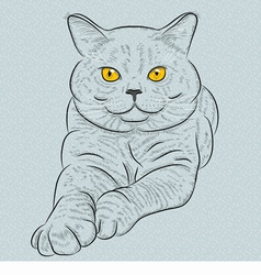 British blue cat with yellow eyes vector image