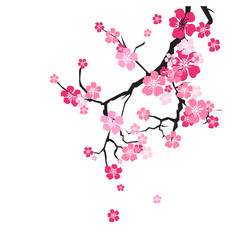 cherry blossom background sakura flowers pink on vector image