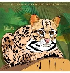 Wild cats jaguar vector