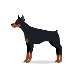 Doberman pinscher dobermann doberman isolated vector