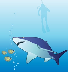 shark tropical vector image