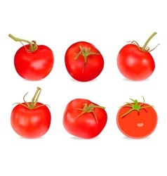 Realistic red tomatos vector