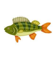 freshwater flat icon colorful perch fish isolated vector image