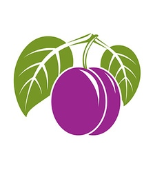 Purple simple plum with green leaves ripe sweet vector image vector image