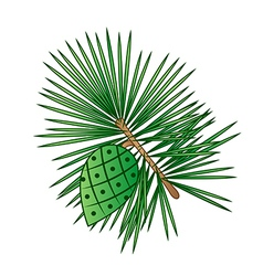 Sprig of pine with pinecone vector