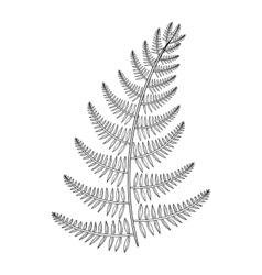Zentangle male fern for tattoo in boho vector