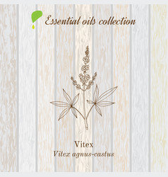 Pure essential oil collection vitex wooden vector