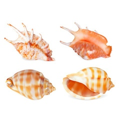 Sea Shell Icon Set vector image