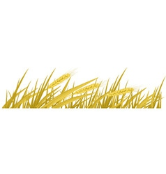 ears of wheat vector vector image vector image