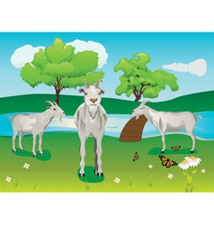 Goat and Green Lawn2 vector image