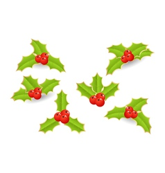 Holly with berries vector
