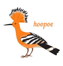 hoopoe vector image