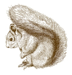 Engraving squirrel vector