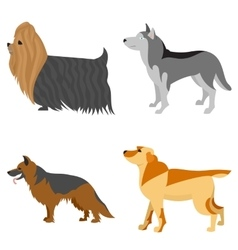 Collection of purebred dogs vector