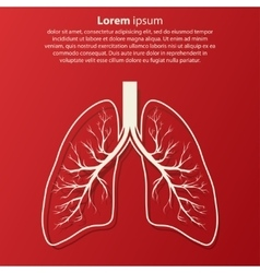 Human lung anatomy vector