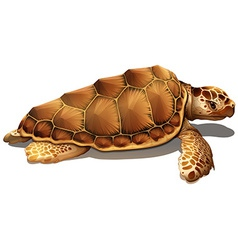 A loggerhead sea turtle vector