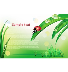 natural background with ladybird vector image
