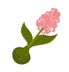 Spring pink syringa flower with green stem and vector