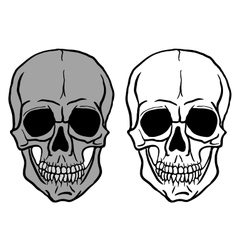 Set of human skulls - vector
