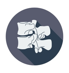 Anatomy spine icon vector