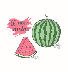 Juicy watermelon with slice vector
