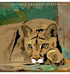 Wild cats cougar vector